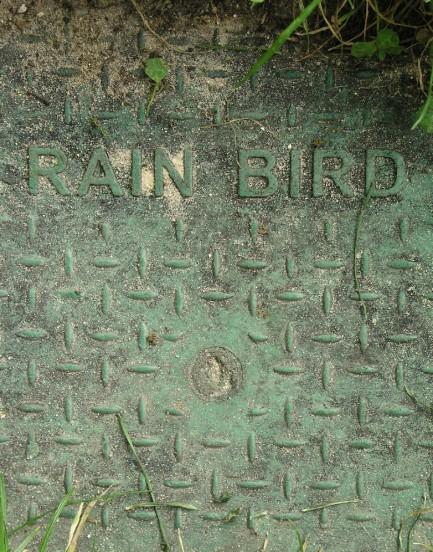 "Franck Scurti ""Rain Bird"" 2017 — unframed"